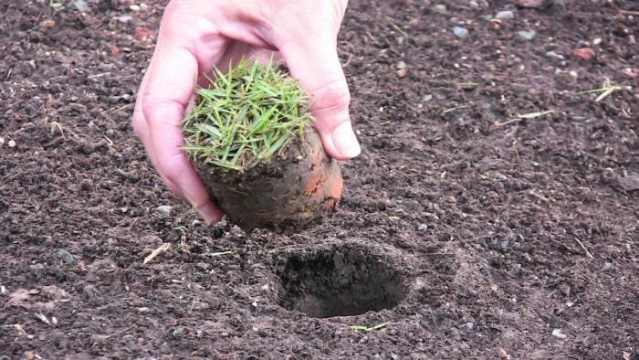 ProPlugger Soil Plug