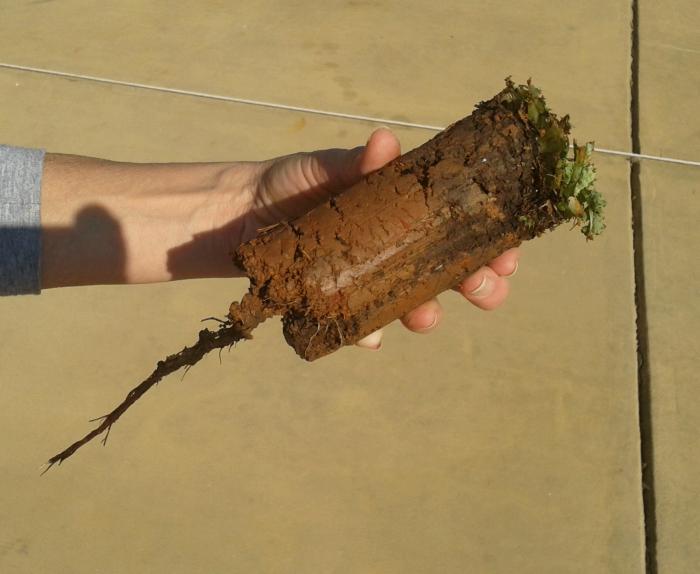 ProPlugger Soil Plug Large